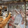 VIDEO: Tiger attacks woman at Beijing wildlife park